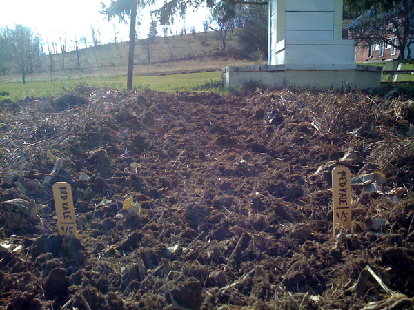 first planting of red kale