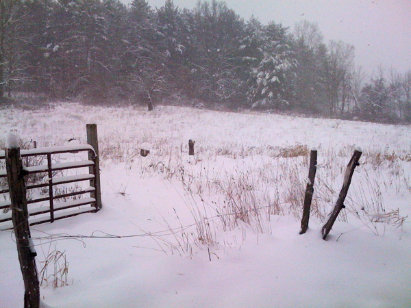 field gate in snow